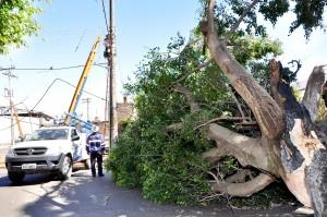 Prefeitura remove quatro árvores para duplicação da Avenida 32