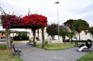 Mutirão reúne cinco secretarias para embelezar praças, canteiros de vias e rotatórias