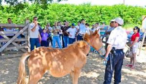 Prefeitura convoca para retirada de animais de grande porte
