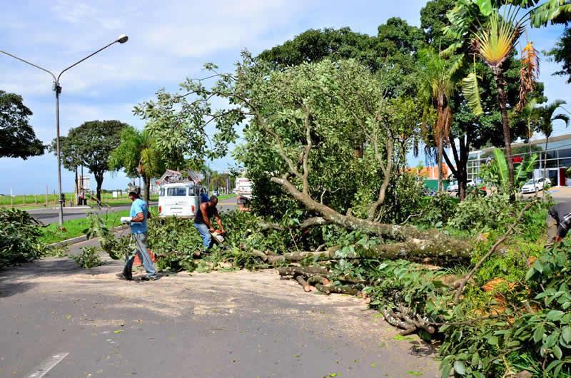 Obras da nova rotatória da Avenida 29 determinam corte de árvores