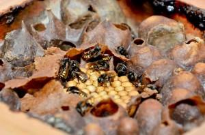 Secretaria de Agricultura alerta sobre produtos de origem animal sem inspeção