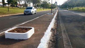 Plantio de palmeiras na Avenida Castelo Branco será feito por crianças