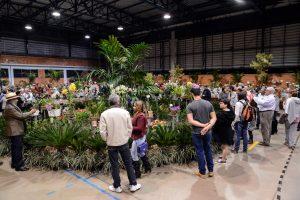 Domingo é último dia para ver exposição de orquídeas