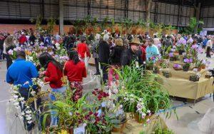 Exposição de orquídeas lota rede hoteleira em Rio Claro