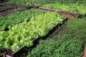 Rio Claro prepara curso para capacitação de produtores orgânicos