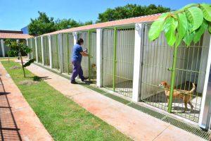 Adoções no canil municipal dobram em julho