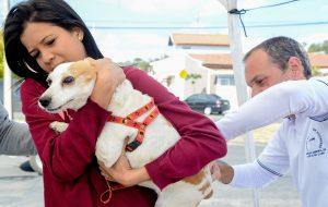 Rio Claro vacinou mais de 1.700 animais contra a raiva no fim de semana
