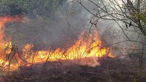 Defesa Civil e Bombeiros controlam incêndio em área no Residencial dos Bosques