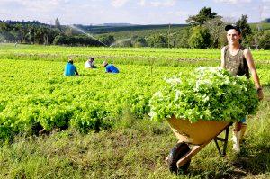 85% dos produtores rurais de RC já fizeram o Cadastro Ambiental Rural