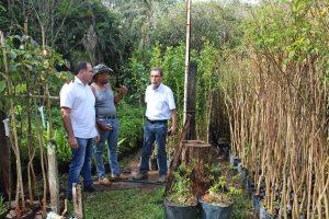 Mudas são adquiridas para a implantação de florestas urbanas