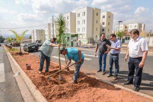 Prefeitura planta palmeiras em trecho da Rua Jacutinga no Jardim Araucária