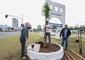 Avenida Tancredo Neves recebe plantio de palmeiras e podas de  árvores