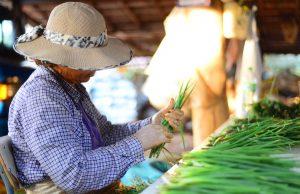 Prefeitura vai investir mais de R$ 2 milhões em produtos da agricultura familiar