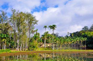 Sala Verde será inaugurada nesta 3ª-feira na Floresta Edmundo Navarro de Andrade