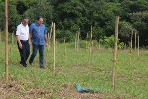 Prefeitura de Rio Claro plantou  mais de 7.000 árvores em 2017