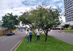 Avenida Tancredo Neves terá novo paisagismo