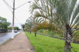 Avenida Tancredo Neves ganhará 28 palmeiras e novo gramado