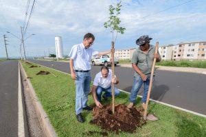 Prefeitura planta 22 ipês no Jardim das Nações II
