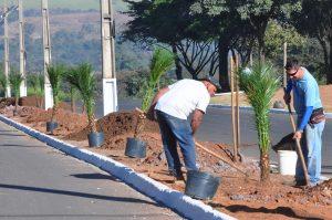 Voluntários plantam 150 mudas  domingo na Floresta Estadual