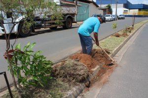 Prefeitura estuda regulamentação para plantio de árvores frutíferas