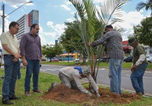 Prefeitura planta 37 palmeiras na Avenida Tancredo Neves