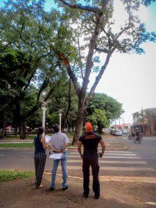 Prefeitura avalia saúde das  árvores na Via da Saudade