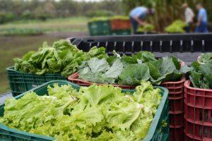 Comunidade recebe orientações  para produção de hortas caseiras