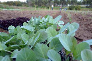 Estímulo à agricultura orgânica é tema de reunião em Rio Claro