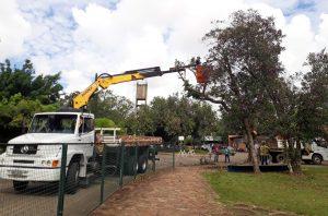 Prefeitura amplia serviços de poda de árvores
