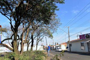 Prefeitura realiza poda de árvores na Vila Operária