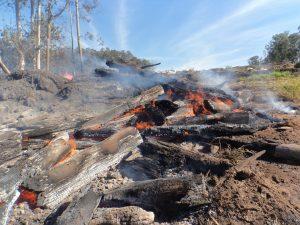Trabalho conjunto impediu  dimensão maior em incêndio