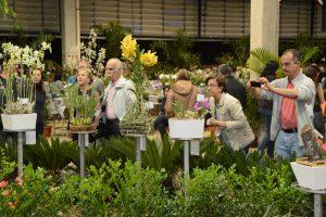400 expositores de 74 cidades na  Exposição de Orquídeas em Rio Claro