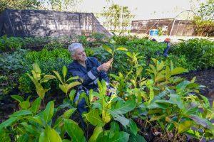 Daae recupera viveiro de mudas  para proteção de rios e nascentes