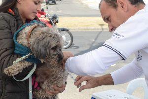 Vacinação antirrábica termina neste final de semana em RC