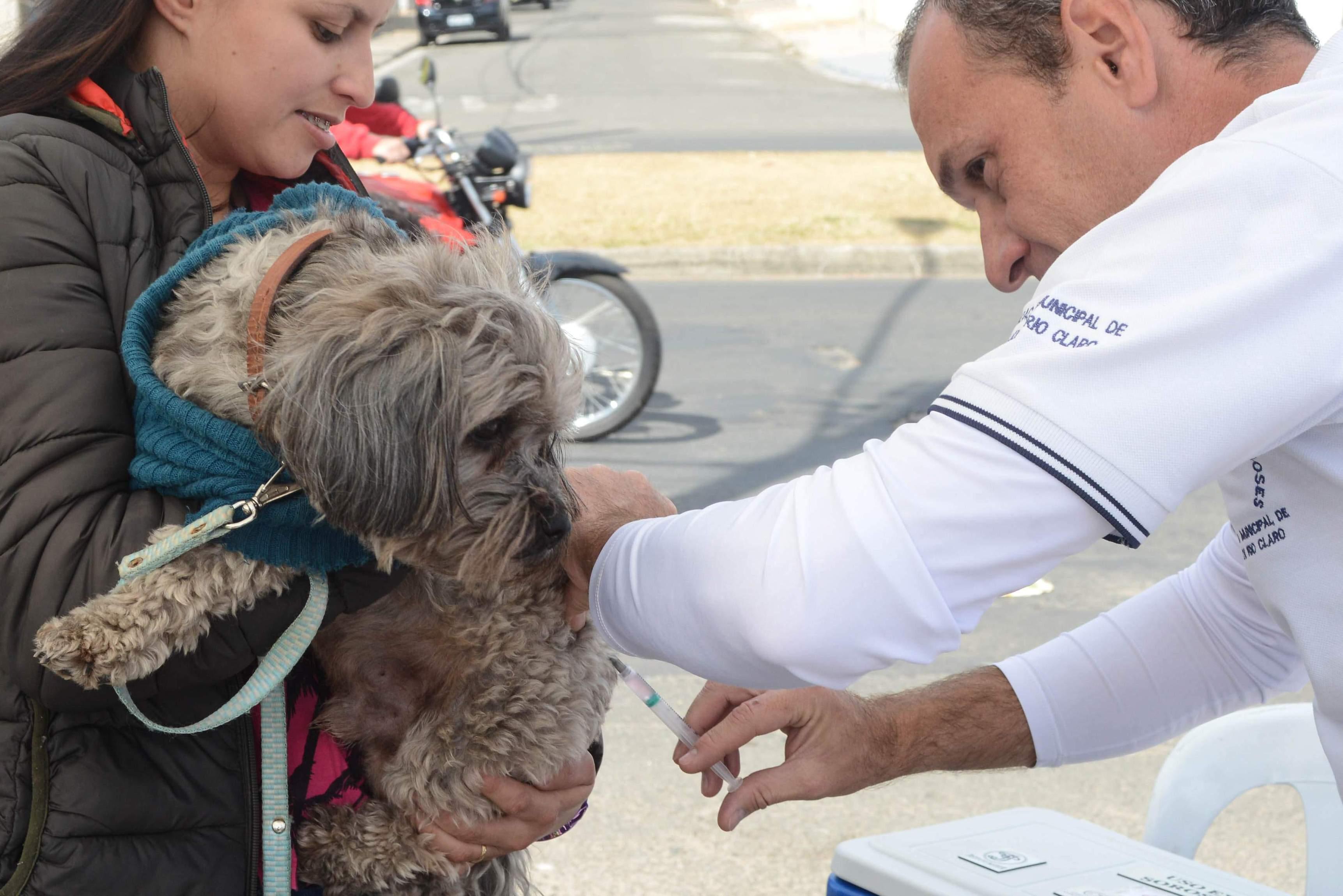 Fim de semana tem 14 postos de vacinação antirrábica