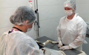 Em 8 meses CCZ castra 2600 animais e supera média anual de cirurgias